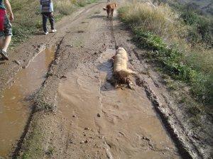 Dogs-love-madbaths