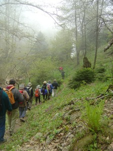 Hikers-back-view-in-fog