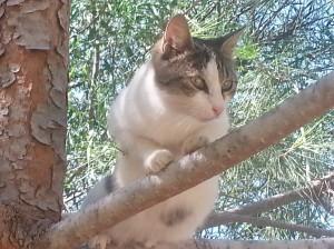 Pedieos-river-banks-cat-on-tree-branch-lighter