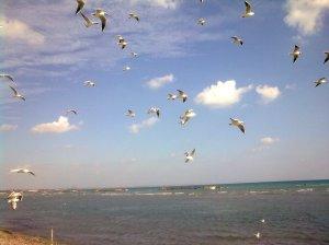 Oroklini-sea-gulls