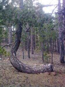 Tree-trunk-unusual