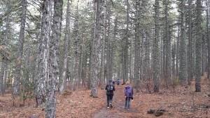 CY-Stroll-Troodos-AtalantiTrail-forest-rear