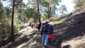 15-12-06-CY-Stroll-AdelphiForest-Asinou020