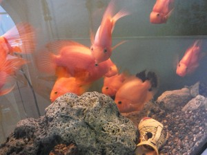 Monte Carlo goldfish