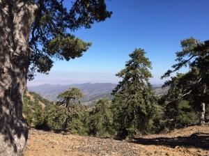 black-pines