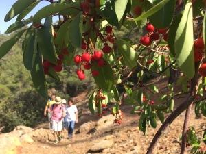 fruit-strawberry-tree