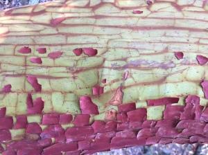 tree-bark-peeling-close-up