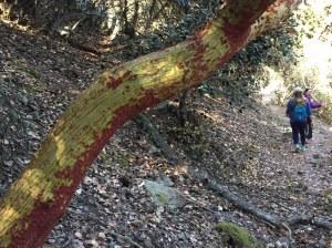 tree-bark-peeling