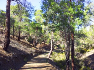 forest-and-path