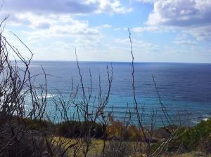 sea-branches